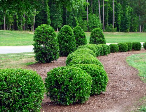 Shrub Care